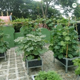 VEGGIE BEGINNERS GARDEN PACKAGE with 3 FREE Gardener visit