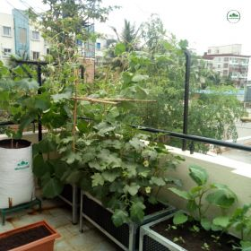 GREENS BALCONY PACKAGE