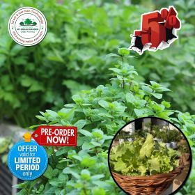 MDG leafy veggies garden package with 5% OFF limited time Offer