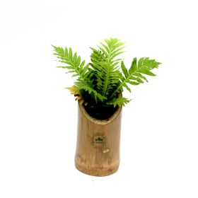 Designer Bamboo & Plants For Table