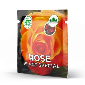 Rose Plants Special