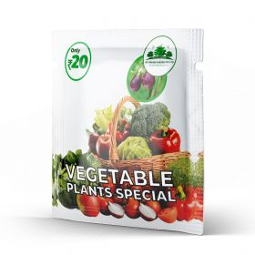 Vegetable Plants Special
