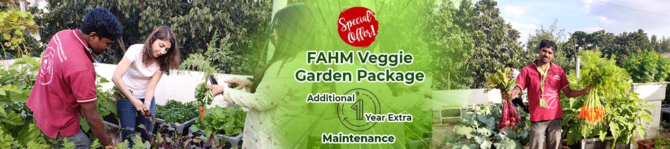 https://www.mydreamgarden.in/additional-extra-upto-1-year-free-maintenance-on-garden-package/fahm-veggie-garden-package.html