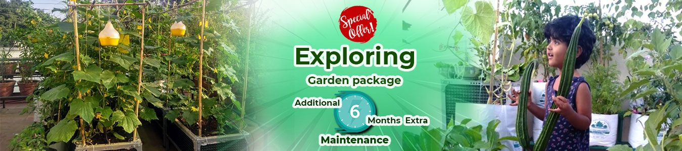 https://www.mydreamgarden.in/additional-extra-upto-1-year-free-maintenance-on-garden-package/exploring-veggie-garden-package.html