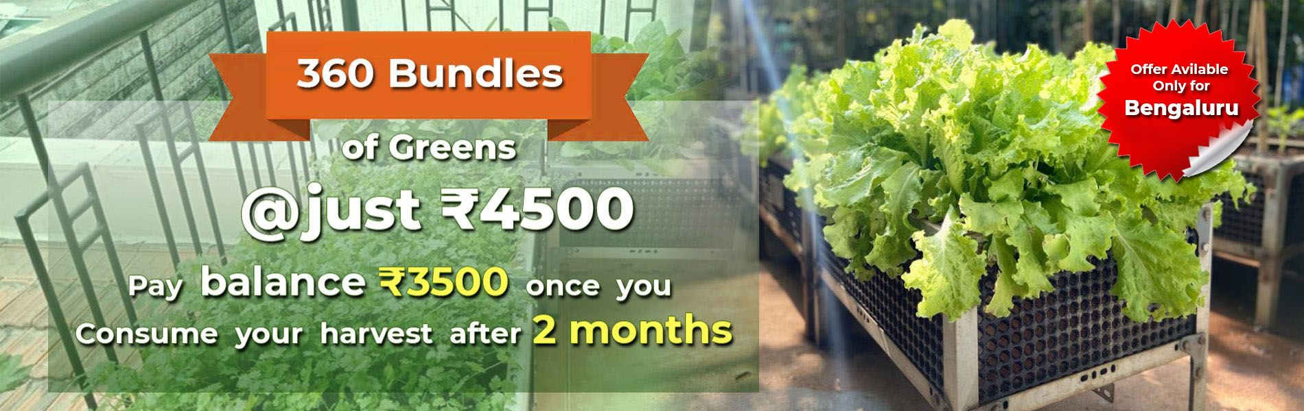 https://www.mydreamgarden.in/mdg-new-initiative-garden-at-just-rs-4500/mdg-new-initiative-garden-at-just-rs-4-500.html