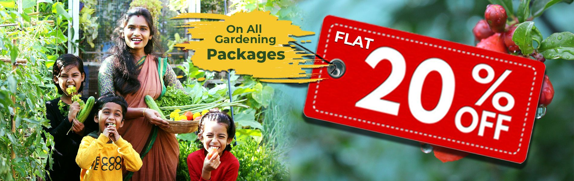 https://www.mydreamgarden.in/gardening-packages/terrace-gardening-magic-planter-box-packages.html