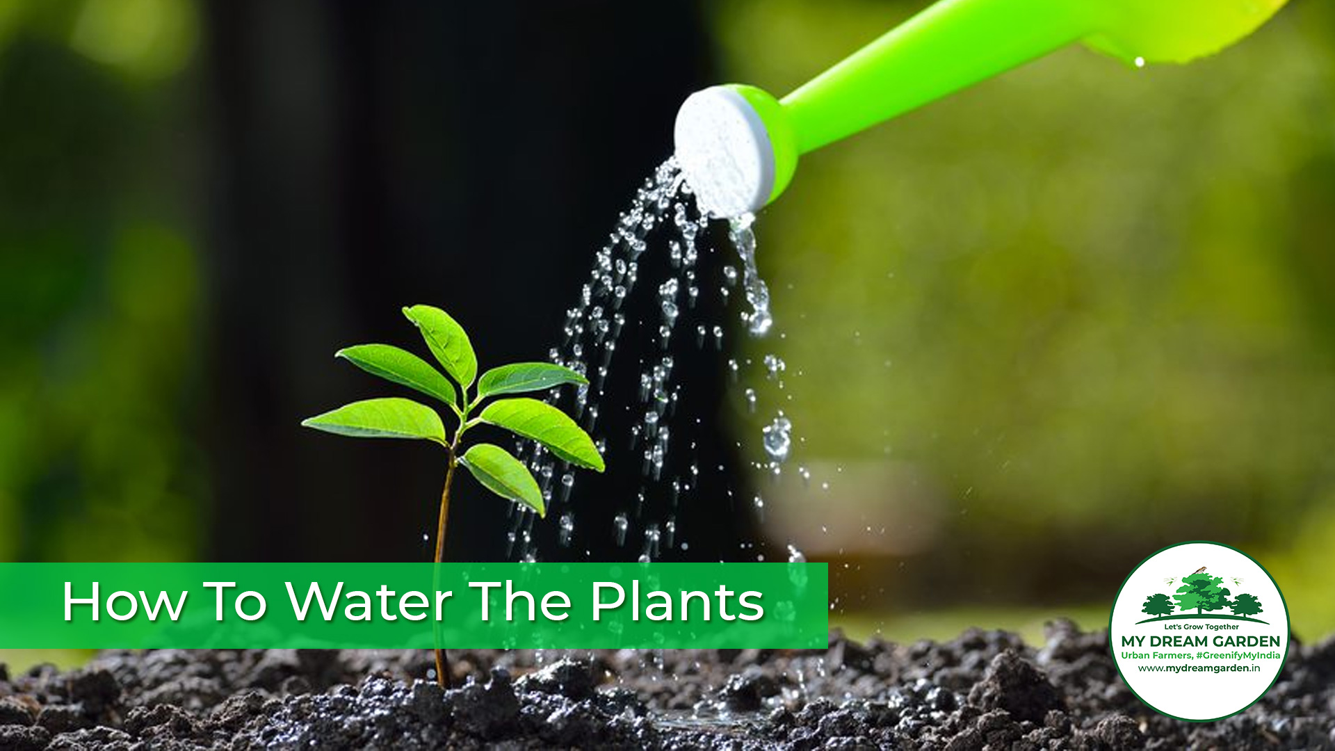 How To Water The Plants
