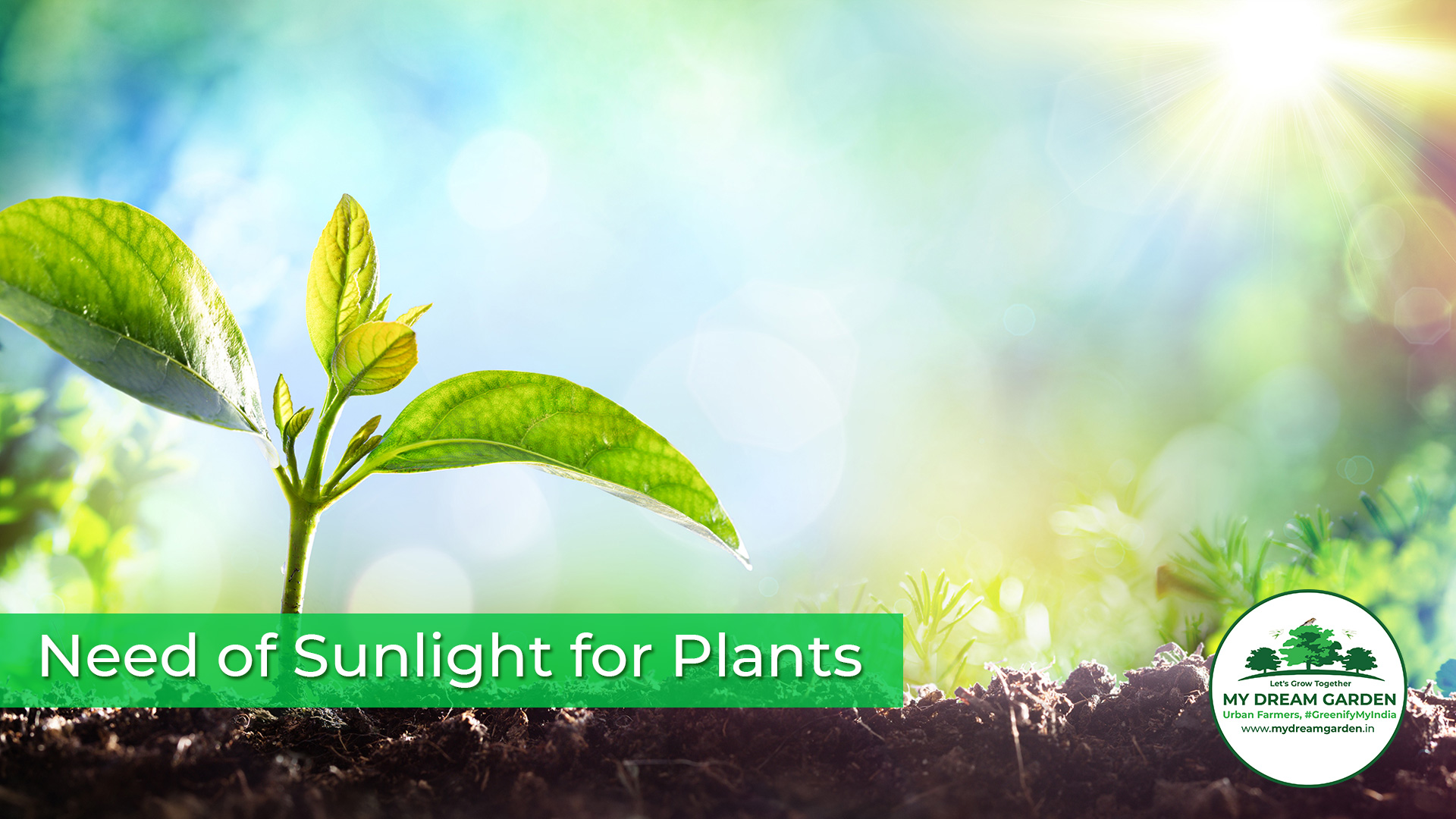 Need of Sunlight for Plants