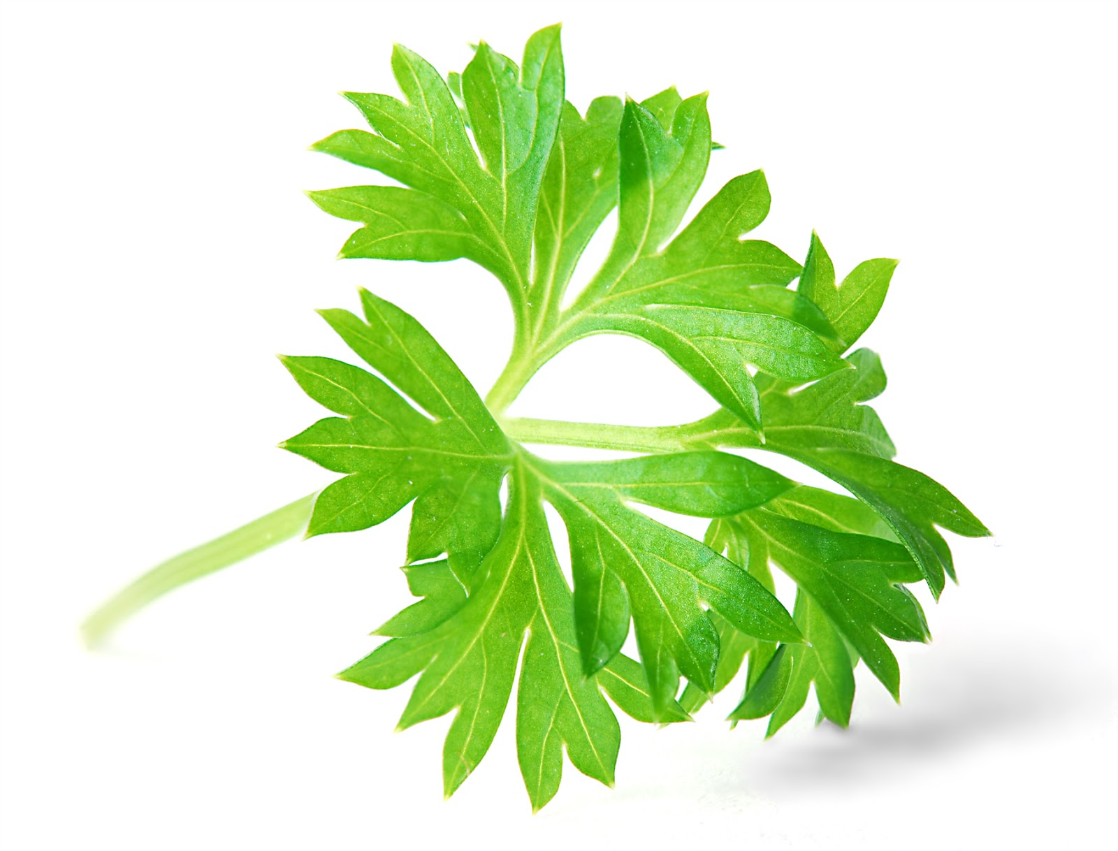 PARSLEY & ITS USES