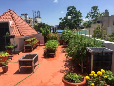 Urban Life Tips: How Terrace  and Balcony Gardening Acts as a Stress Buster?