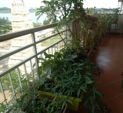 Five Balcony Gardening Tips which you need to know