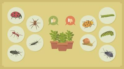 HOME REMEDIES FOR PESTS & DISEASE MANAGEMENT