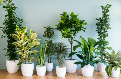 Best 10 Indoor Air Purifying Plants
