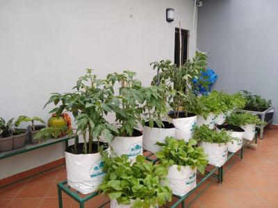 Plant Grow Bags: Types & Uses for Different Vegetables in Gardening