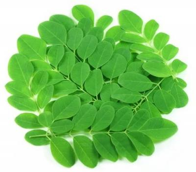 DRUMSTICK LEAVES- ITS BENEFITS