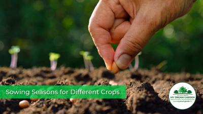 Sowing Seasons for Different Crops