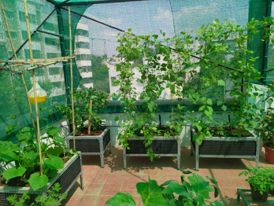 What is Terrace Gardening?