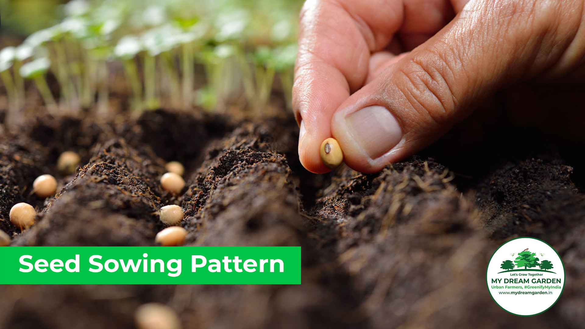 Pattern of Sowing Seeds
